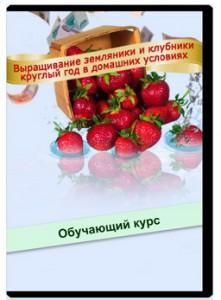 Бизнес_выращивание_клубники